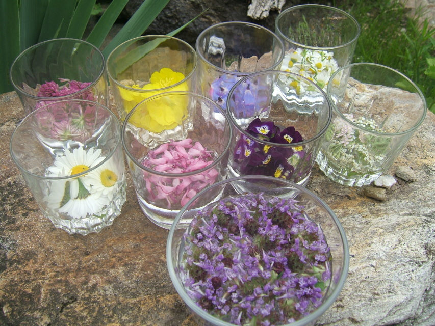 Image result for flower essences